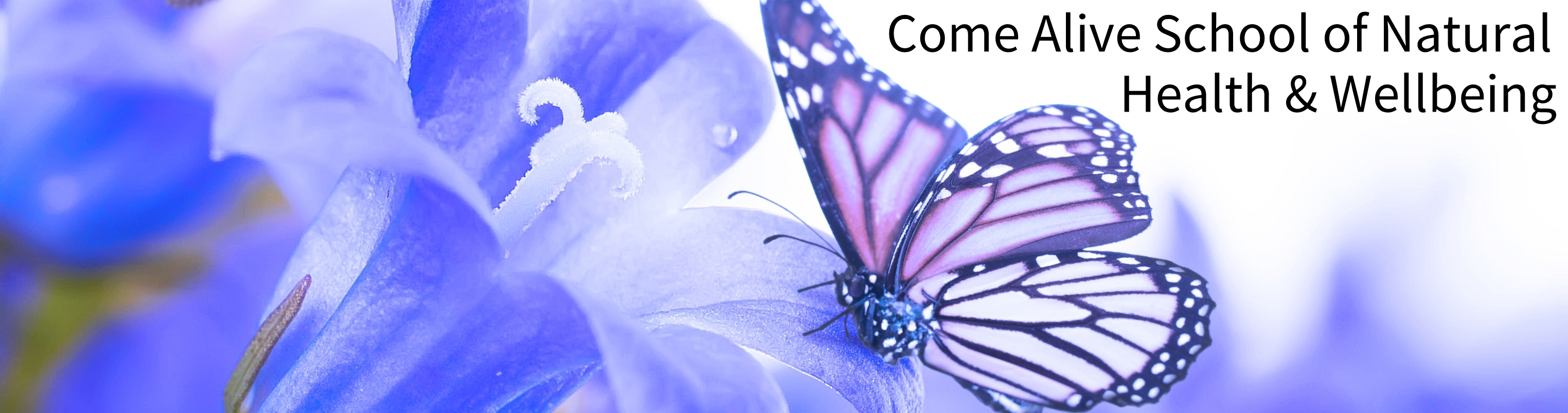 butterfly banner 9